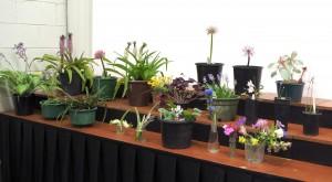 2015.02.07 bench plants