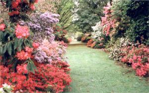 ornamental-garden-12